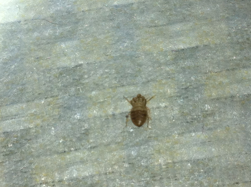 Bedbug treatments Rayleigh from £90