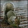 bee pest and Vermin Control, squirrel control Essex,